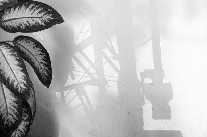 'Grafias de Luz' será nova exposição na Galeria Patrícia Galvão