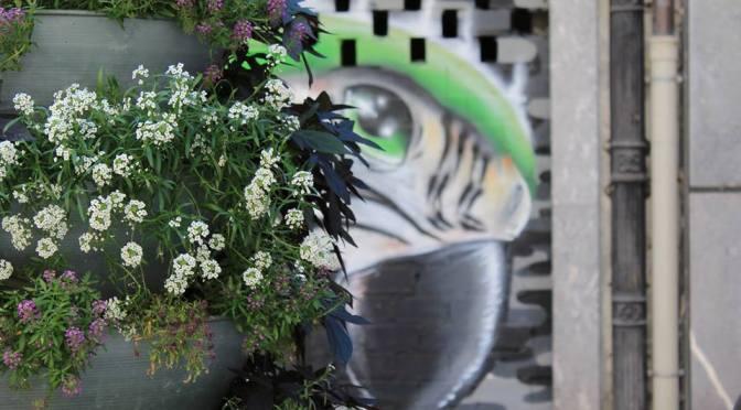 Quatro grafiteiras concorrem à vaga em SV rumo ao festival espanhol Beantatuz