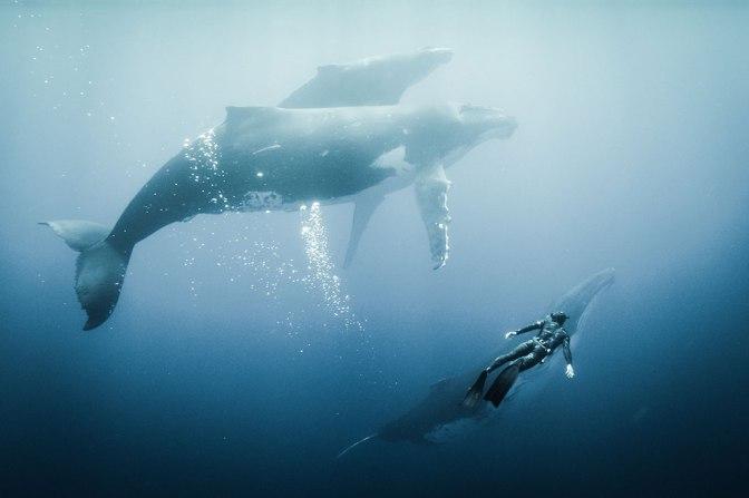 Mostra Ecofalante inicia circulação de 'Triste Oceano' pela Baixada Santista